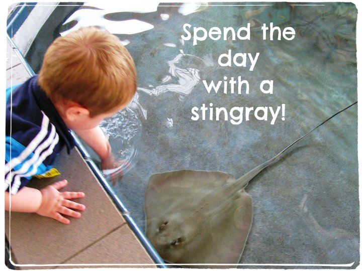 Florida Oceanographic Center Stingray Play