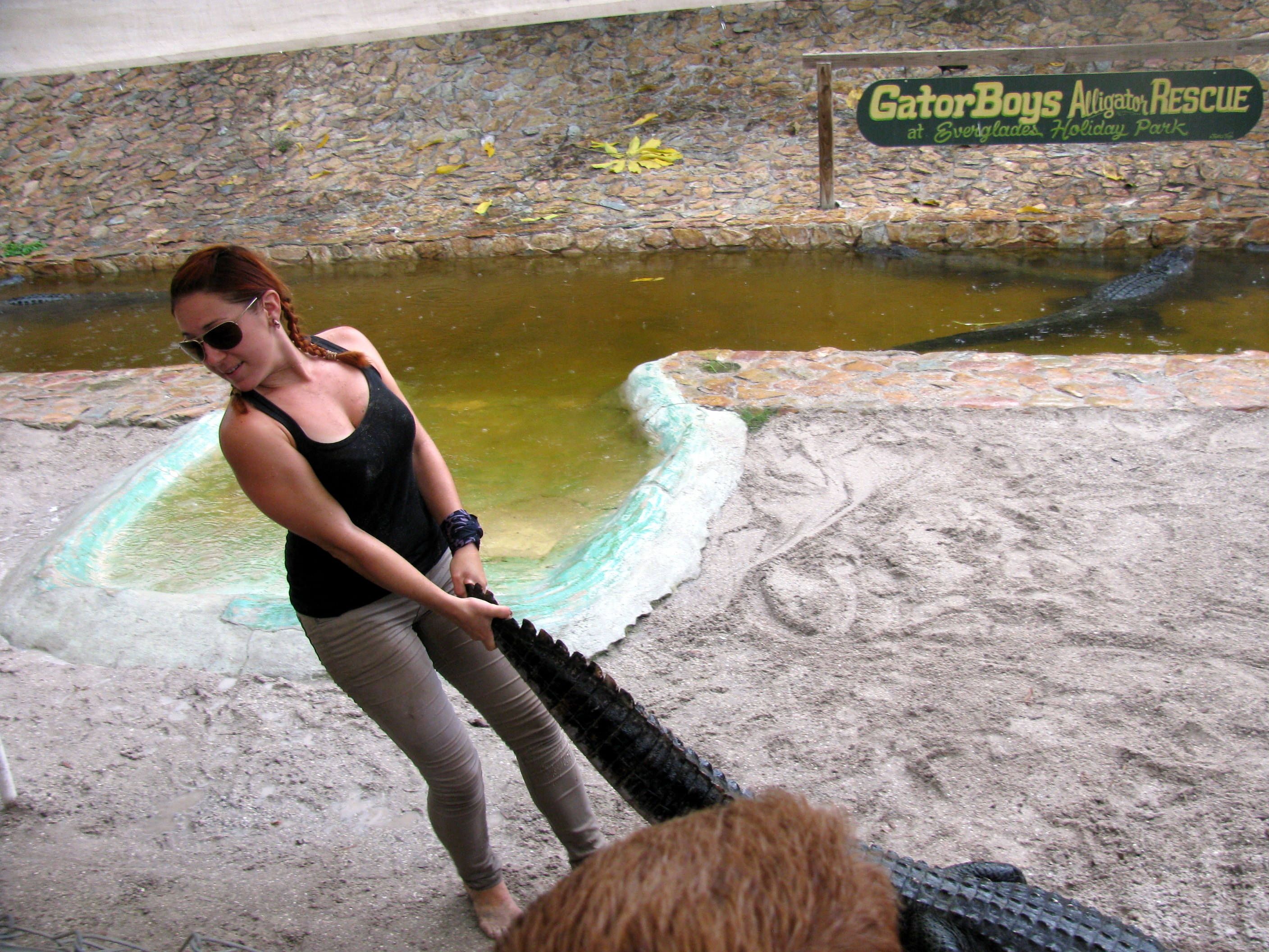 Ashley From Gator Boys http://daywellspent.wordpress.com/2012/08/13/everglades-holiday-park/gator-boys-ashley-got-a-gator-by-the-tail/