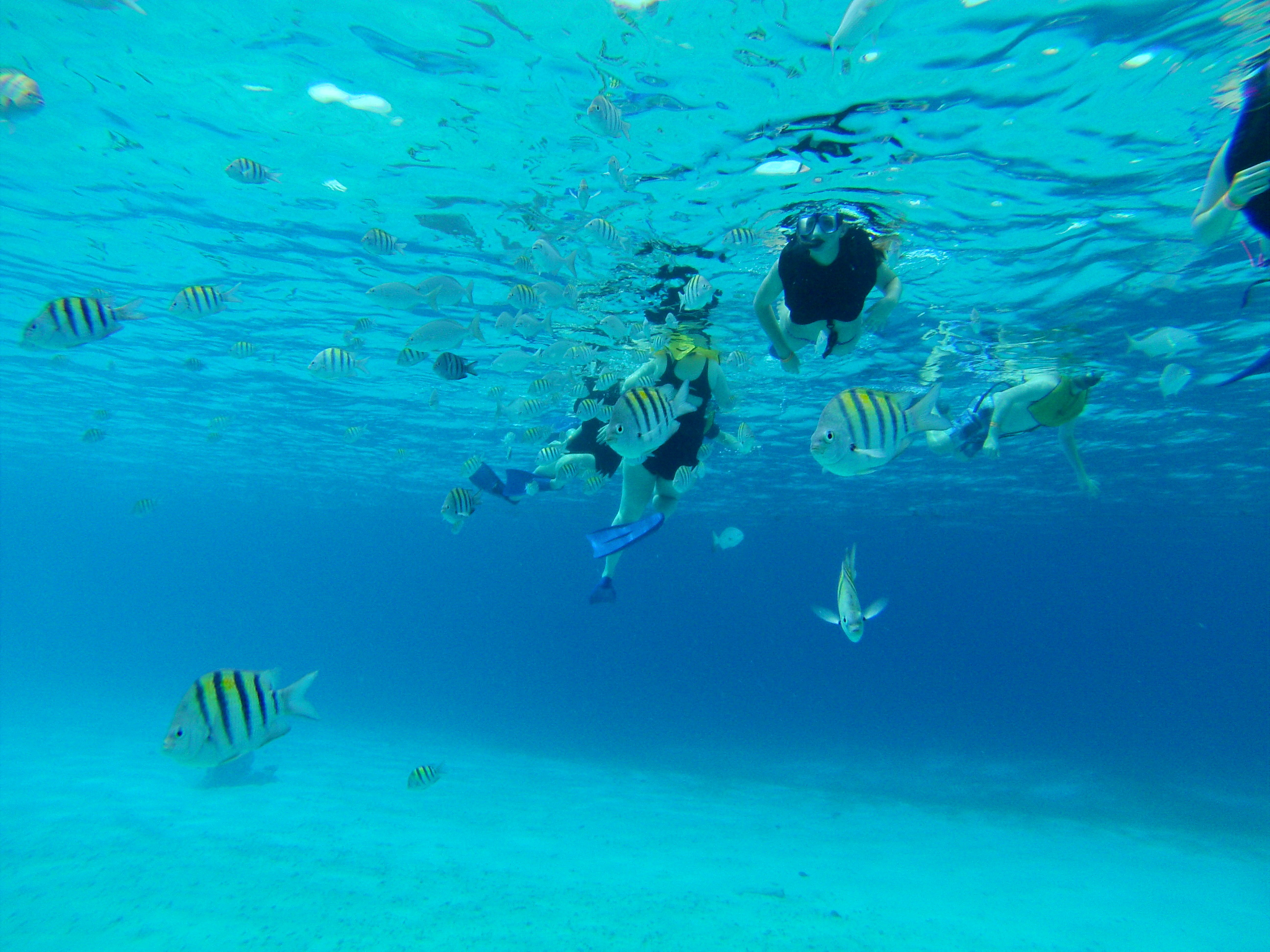 Cozumel Snorkelling: Your Essential Guide - Snorkels and Fins