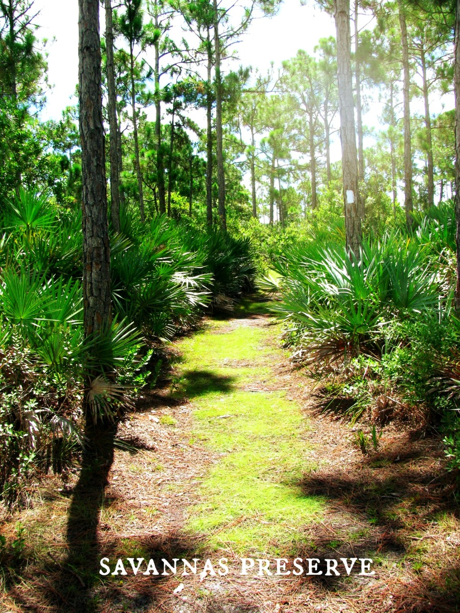 Into the Woods! Exploring Florida's National and State Forests